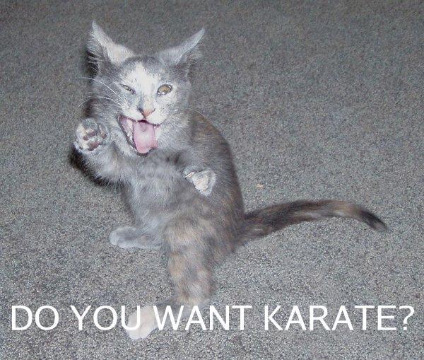 Cat Image Battle 119573285bs6gr
